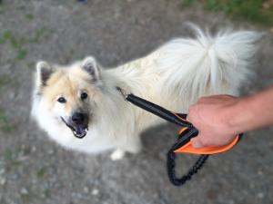 Hund Kendra an der Best Dog Leine